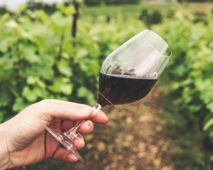 vino-čaša-vinograd